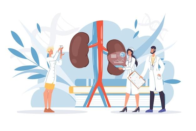 Tratamiento de enfermedades de órganos internos de inspección de riñones humanos