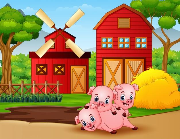Tres cerditos juegan en la granja.