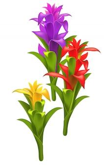 Tres flores realistas de guzmania rojas, púrpuras y amarillas.