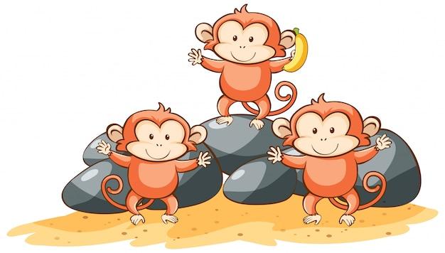 Tres monos sobre fondo blanco.