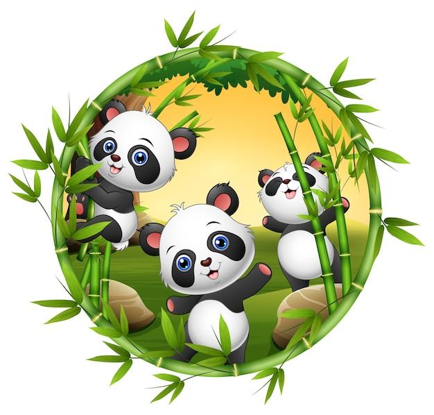 Tres pequeños panda están jugando juntos