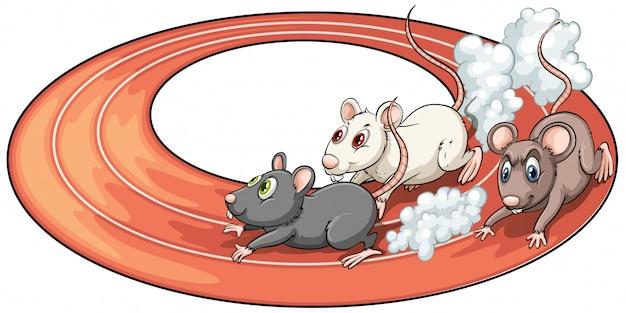 Tres ratas compitiendo