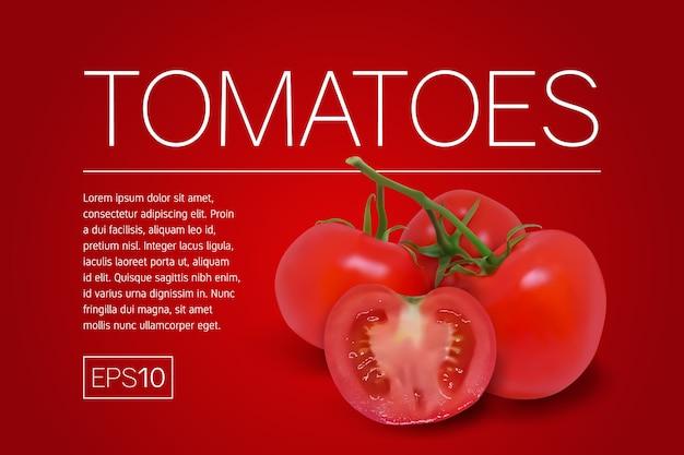 Tres tomates rojos maduros en una rama. ilustración vectorial fotorrealista sobre un fondo rojo.