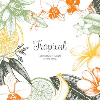 Tropical mano bosquejó plantas exóticas marco vintage en color.
