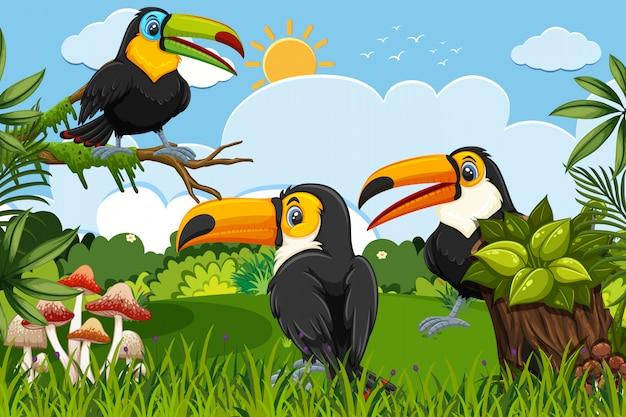 Tucanes en escena de la jungla