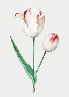 Tulipán en estilo vintage