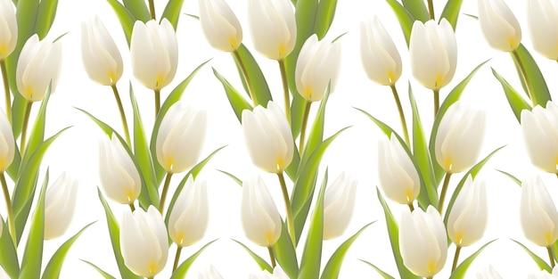 Tulipán, fondo floral, patrón transparente.