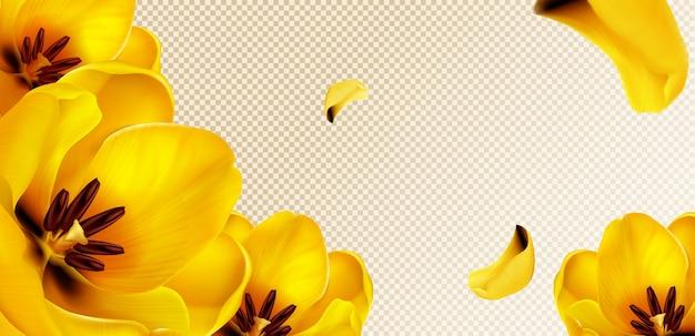 Tulipanes amarillos, pétalos voladores sobre fondo transparente con espacio para copiar texto.