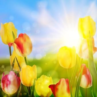 Tulipanes púrpuras y amarillos contra el cielo.
