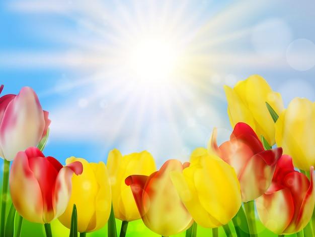 Tulipanes que crecen en jardín en verde.