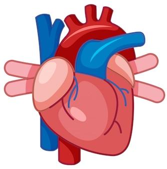 Una caricatura del corazón humano