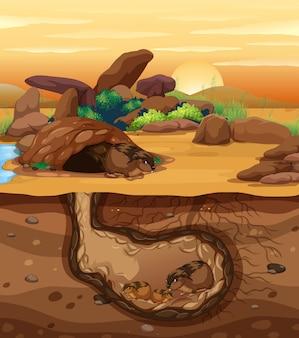 Una familia de conejillos de indias vive bajo tierra