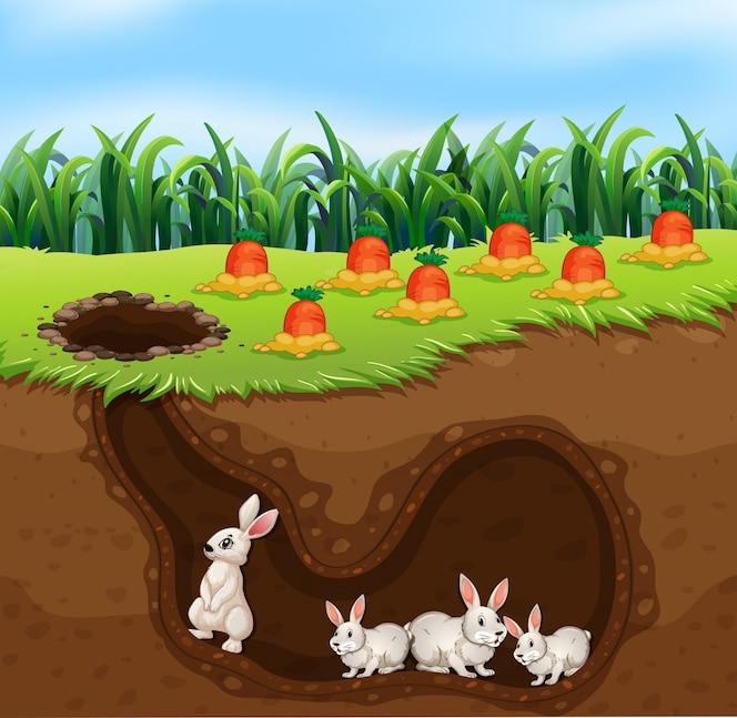 Una familia de conejos que vive en el agujero
