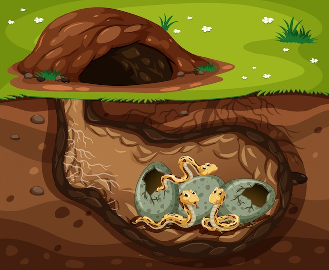 Una serpiente que vive debajo del agujero