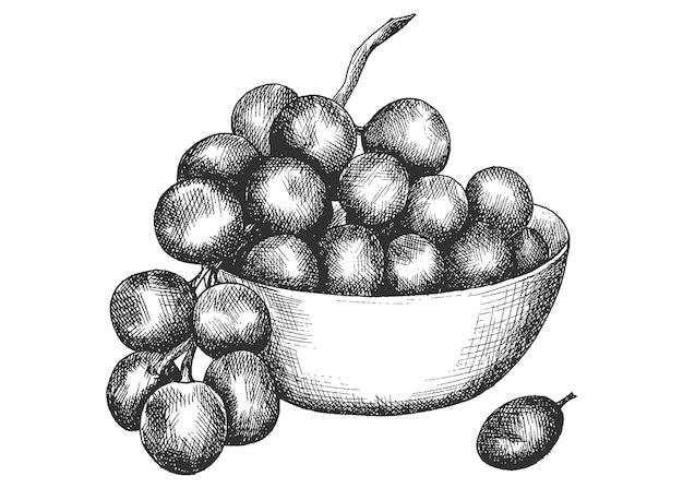 Uvas, dibujo a mano, bosquejo