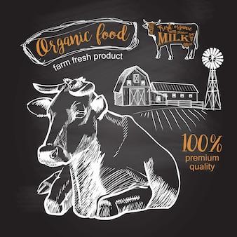 Vaca acostado en la granja de pasto dibujo de tiza gráfico vintage en la pizarra
