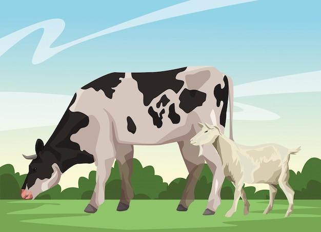 Vaca y cabra