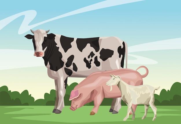 Vaca, cerdo, y, cabra