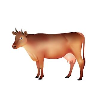 Vaca marrón realista