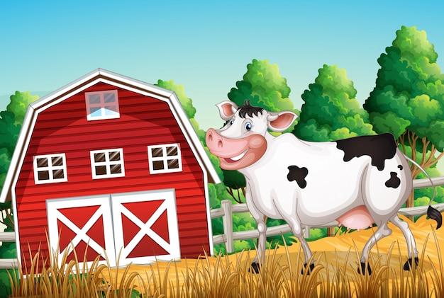 Vaca en las tierras de cultivo