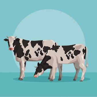 Vacas animales de granja
