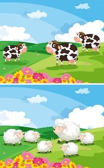 Vacas y ovejas en los campos
