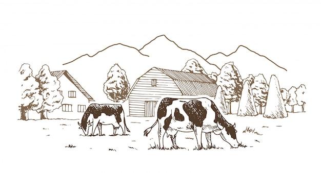 Las vacas pastan en el prado.