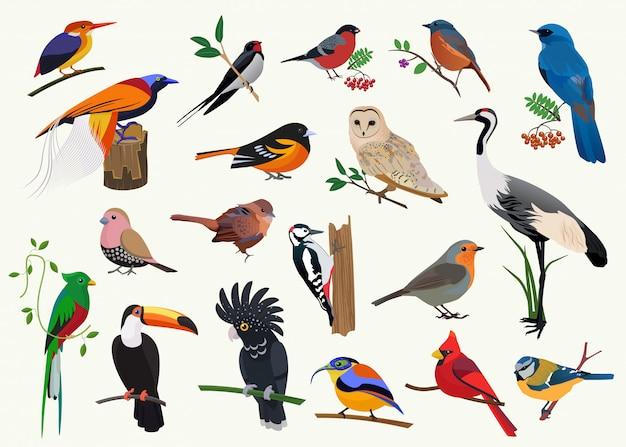 Varias colecciones de pájaros de dibujos animados para cualquier diseño visual.