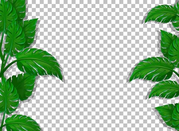 Varias hojas tropicales sobre fondo transparente