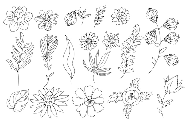 Varias ilustraciones florales de líneas dibujadas a mano