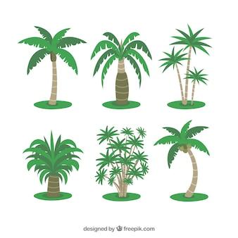 Varias palmeras tropicales