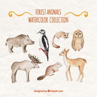 Variedad de animales salvajes de acuarela