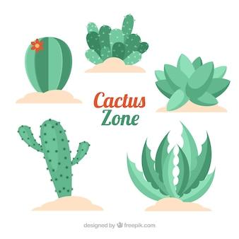 Variedad de cactus con diseño plano