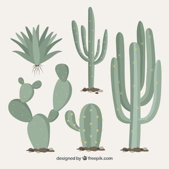 Variedad clásica de cactus salvajes
