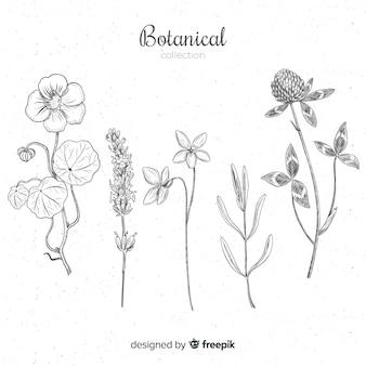 Variedad de flores dibujadas a mano