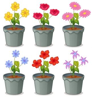 Variedad de flores en macetas