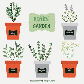 Variedad de hierbas de jardín
