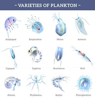 Variedades de iconos aislados de plancton con ilustración de dibujos animados de explicación de texto