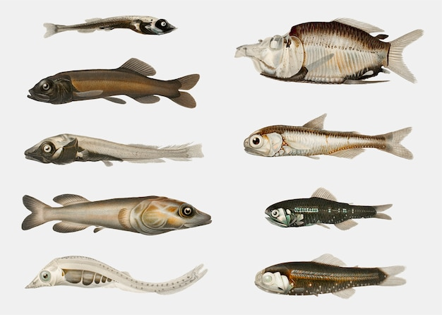 Variedades de pescado