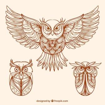 Varios búhos decorativos dibujados a mano