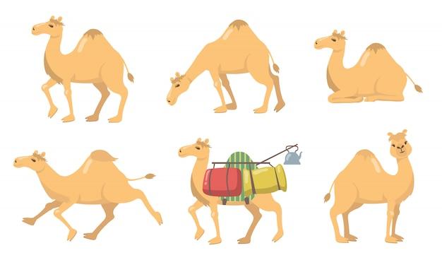 Varios camellos con un conjunto de iconos planos de joroba