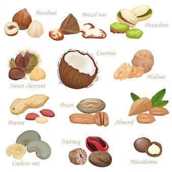 Varios set realistas de nueces y semillas.