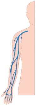 Vasos sanguíneos de la mano en el cuerpo humano