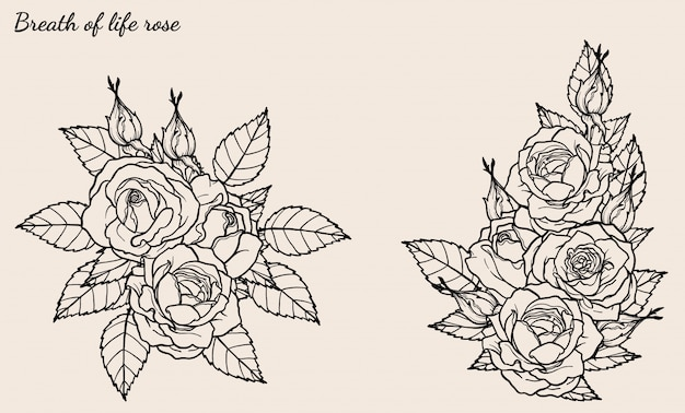 Vector de adorno rosa establecido por dibujo a mano