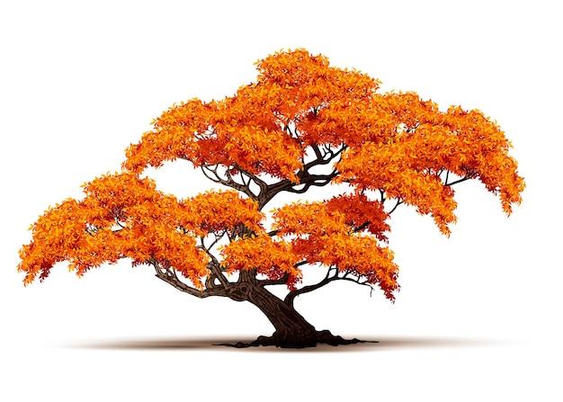 Vector de árbol de otoño realista aislado sobre fondo blanco