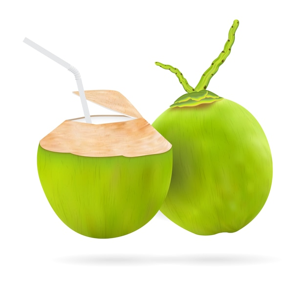Vector de bebida de coco