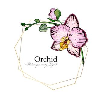Vector brillante arreglo floral de orquídeas