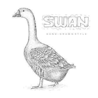 Vector de cisne realista, ilustración de animales dibujados a mano