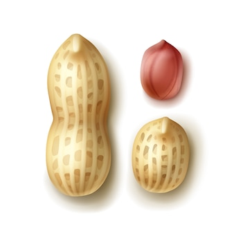Vector conjunto de cacahuetes enteros con cáscara de cerca vista superior aislada sobre fondo blanco