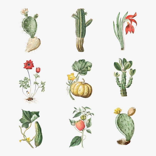 Vector conjunto de flores y cactus
